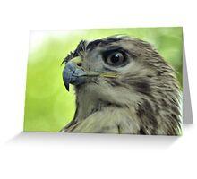 Hawk Eye Greeting Card