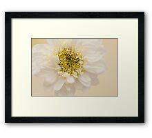White Mini Chrysanthemum Macro Framed Print