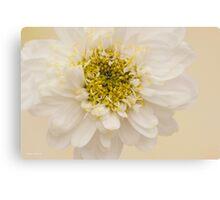 White Mini Chrysanthemum Macro Canvas Print