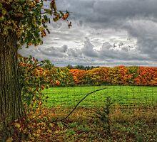 The Fence... by Jeremy Lavender Photography