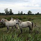 Camargue by bubblehex08