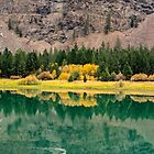 October on the Flathead -- Fall Color in the Water by Bryan D. Spellman