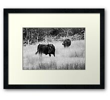 Cows black and white Framed Print