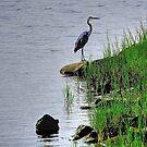 Heron on the shore by Nancy Richard