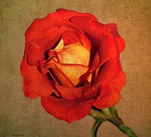 Parchment Flame by RC deWinter