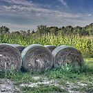 Hay Bales by Colleen Drew