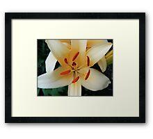 Geometric Flower Fine Art Photography Framed Print