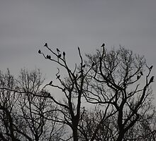 A Murder of Crows by truthceeker