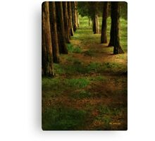 Sunrise Allée Canvas Print