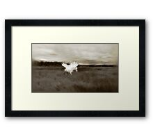 Willow takes flight Framed Print