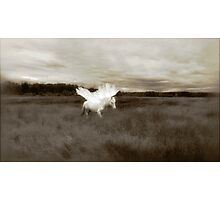 Willow takes flight Photographic Print