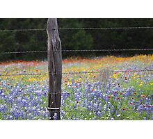 Texas Wild Flowers Photographic Print