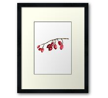 Rosa Canina Illustration Watercolor Painting Drawing Image Poster Framed Print