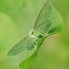 Green moth by JBlaminsky