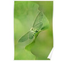 Green moth Poster