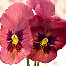 Pretty Pansies by Sandra Foster