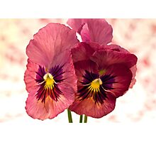 Pretty Pansies Photographic Print