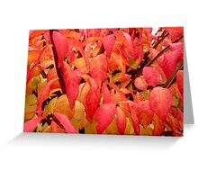 Festival Leaves Greeting Card