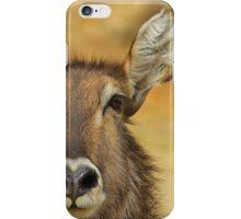 Waterbuck - Focused Stare - African Wildlife iPhone Case/Skin