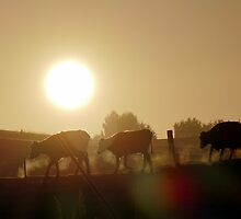 Misty Sunrise Cows - NZ by AndreaEL