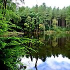 Delamere Forest September  2014 by Debra Kurs