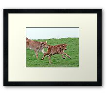 The Joy Of Being Young & Free - NZ Framed Print