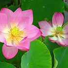 Water lilies by Alberto  DeJesus