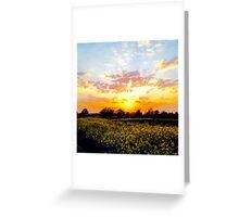 Sun field Greeting Card