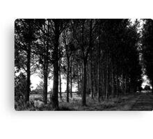 Black and White Tree Landscape Scene Canvas Print