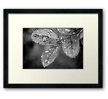 Rain Droplets Framed Print