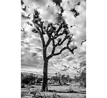 Joshua Tree Photographic Print