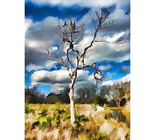 One Bare Tree in the Evening Light Photographic Print