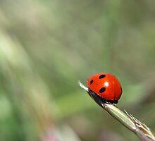 Lady Bug Squared by Miriam Gordon