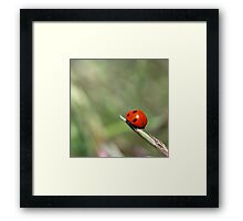 Lady Bug Squared Framed Print