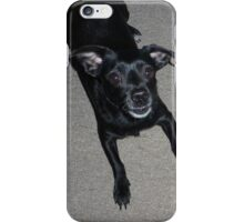 The Dachsuahua iPhone Case/Skin