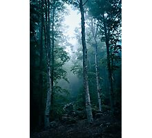 Dark forest with fog Photographic Print