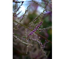 Pink Italian Flower Macro  Photographic Print