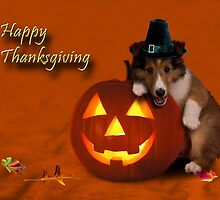 Thanksgiving Pilgrim Shetland Sheepdog by jkartlife