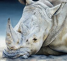 'Africa Dozing – White Rhino' square by Marie-Claire Colyer