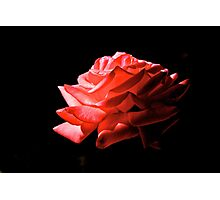 Red Rose by Candlelight Photographic Print