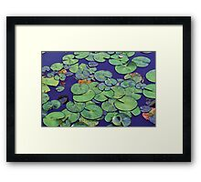 Tranquil waterlily pond Framed Print