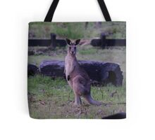 Australian Wallaby, Carnarvon Gorge, Queensland Tote Bag