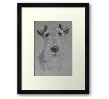 Wire-haired Fox Terrier Framed Print