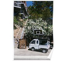 Catalina Island / Flowers Poster