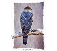Pigeon Hunting Photographic Print