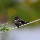 Rain Lover! by Laurie Puglia