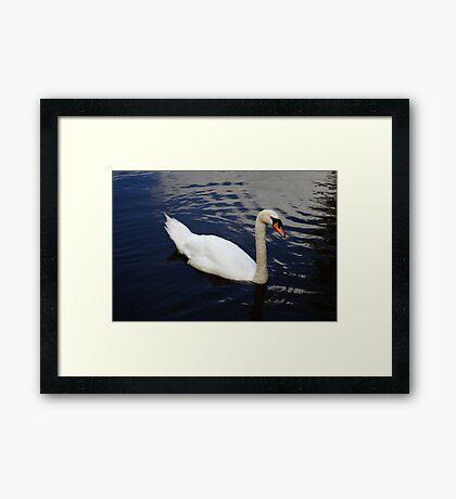 Swan at Oakfield Park Framed Print
