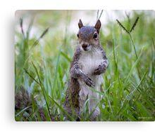 Encounter with a Squirrel Canvas Print