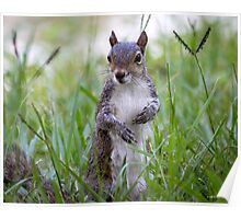 Encounter with a Squirrel Poster