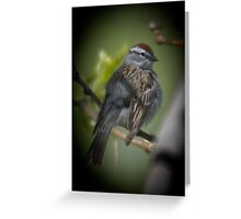 Young Chipping Sparrow Greeting Card